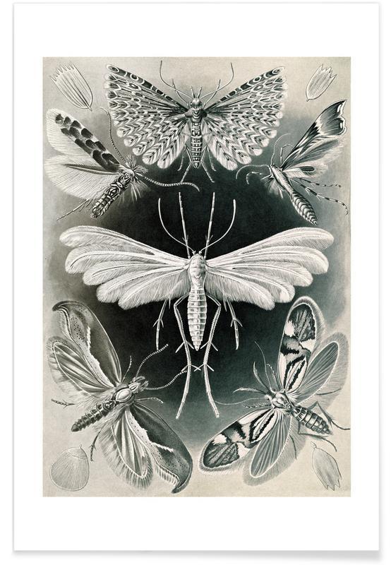 Motten As Poster By Ernst Haeckel Juniqe