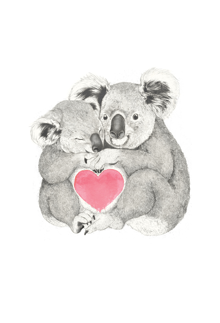 koala as premium poster by laura graves juniqe