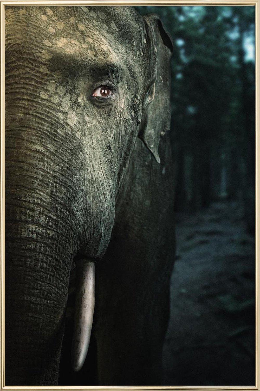 Wir sind Tiere - Elefant als Acrylglasbild von Tupho | JUNIQE