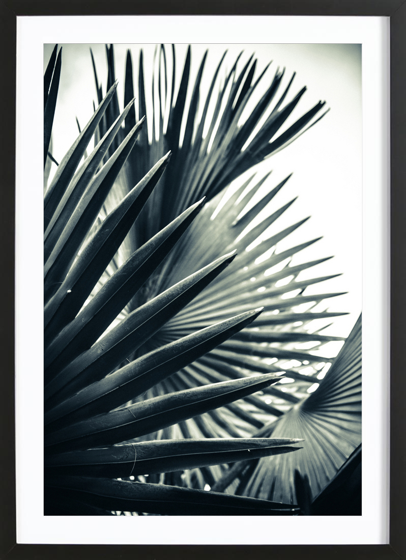 Palm Shade 2 - Framed Premium Poster Portrait