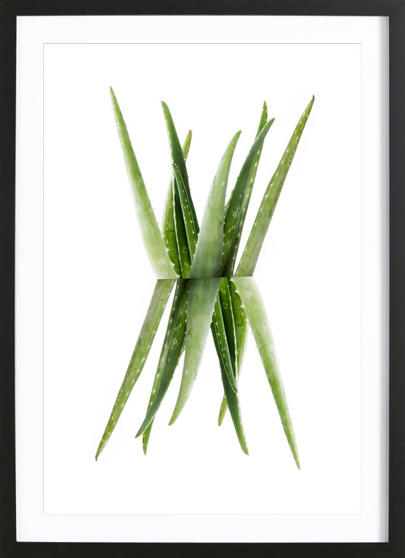 Aloe - Framed Premium Poster Portrait