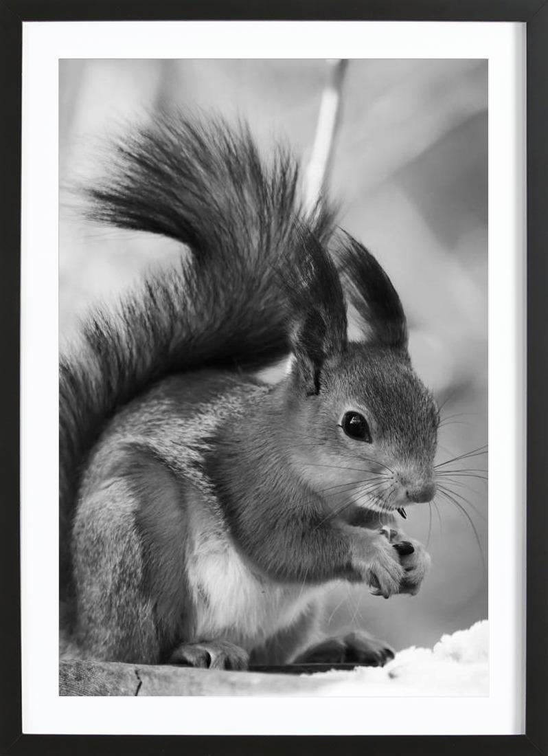 The Squirrel als Duschvorhang von JUNIQE   JUNIQE