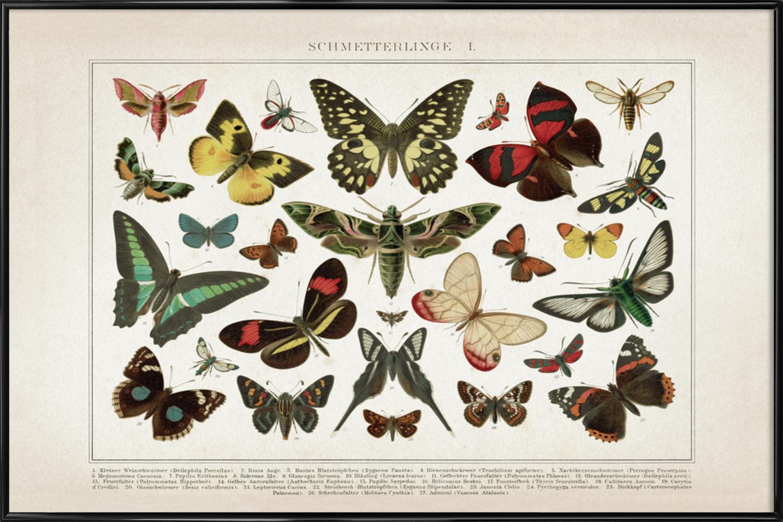 Schmetterlinge 1 - Brockhaus als Poster im Holzrahmen | JUNIQE