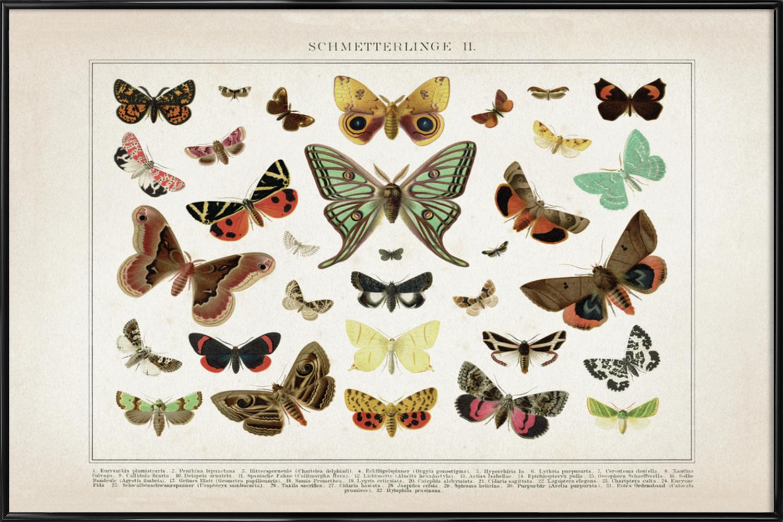 Schmetterlinge 2 - Brockhaus als Poster im Holzrahmen | JUNIQE