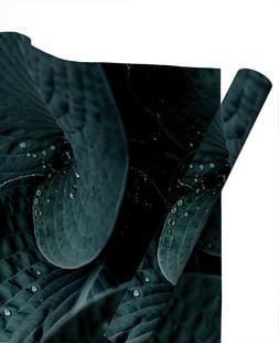 Dark Leaves 5