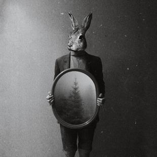 Animals in my room - Rabbit