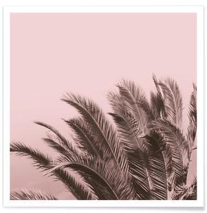 Pink Cape Storm
