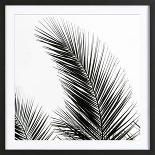 Palm Leaves 1