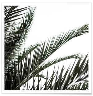 Palm Leaves 2