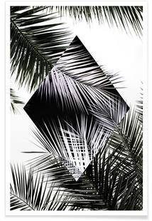 Palm Leaves 3 Geometry