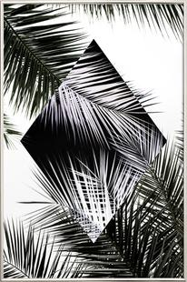 Palm Leaves 3 Geometry