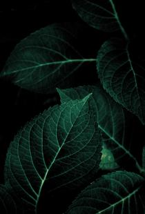 Dark Leaves 1