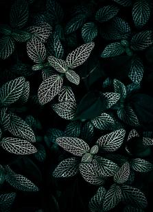 Dark Leaves 3
