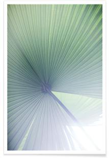 Palm Leaves 5