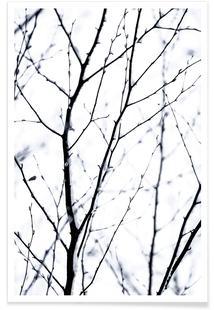 Winter Silhouettes 3