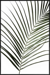 Palm Leaves 8