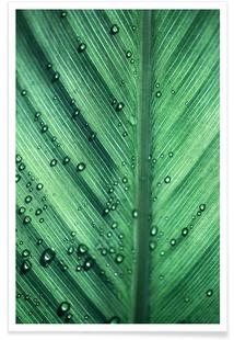 Palm Leaves 11