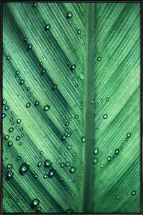 Palm Leaves 11
