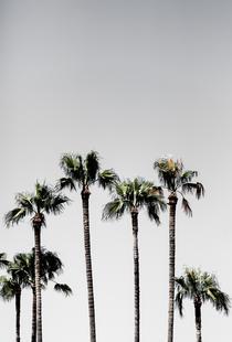 Palm Trees 5