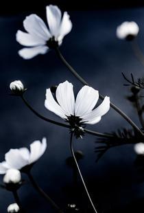 Wild Flowers 1