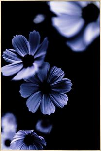 Wild Flowers 15