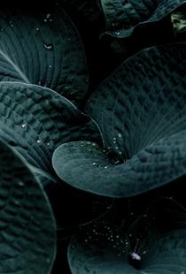 Dark Leaves 5