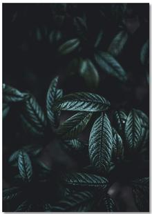 Dark Leaves 6