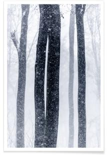 Snow Trees 2