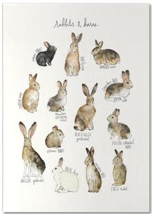 Rabbits and Hares