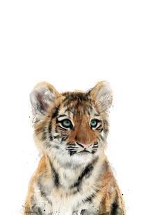 Little Tiger