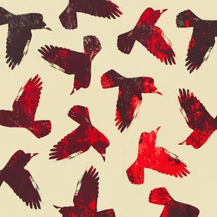 Birds 2 – Red