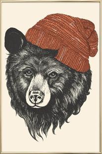 Zissou the Bear
