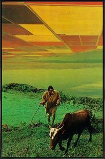 Shepherd of The Plains