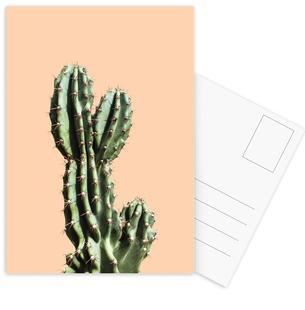 Cactus 01