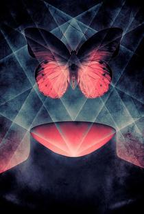 Butterfly Beautiful Symmetry