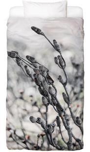 Swartberg Protea 4