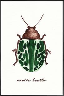 Exotic Beetle