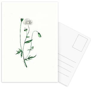 Weiße Mohnblume
