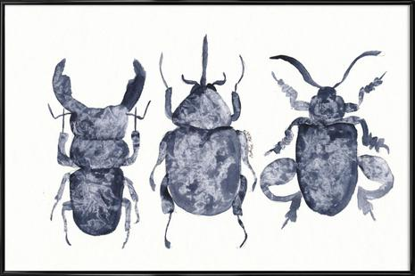 The Beetle Show