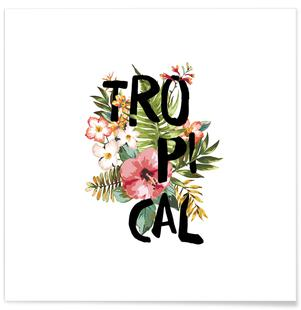 Tropical White