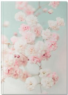 Pink Blush Gypsophila
