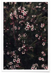 Pink Pine Flowers