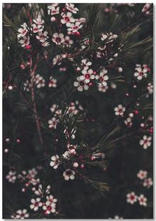 Pink Pine Flowers