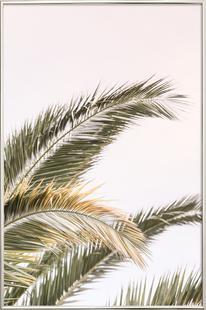 Oasis Palm 3