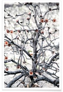 Swartberg Protea 1