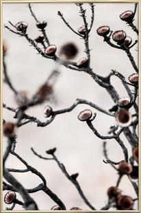 Swartberg Protea 3