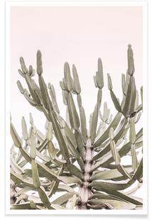 Tankwa Euphorbia 1