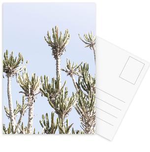 Tankwa Euphorbia 2