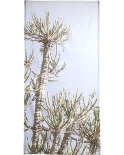 Tankwa Euphorbia 3
