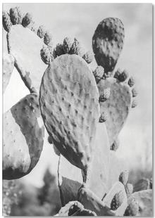 Cacti Cowboy 1